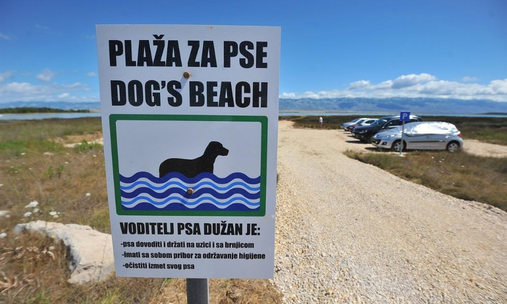 Pet-friendly Beach in Privlaka - Adriatic Luxury Villas